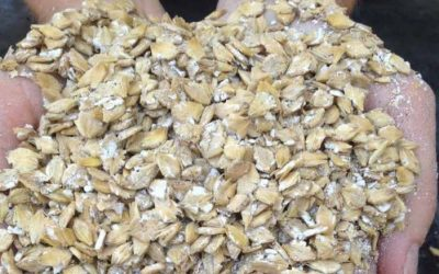 7 Reasons to Use Our Grain Roller Mills